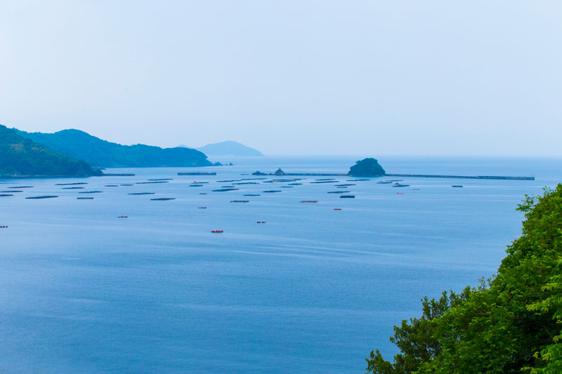 真珠産地の宇和海