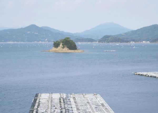 宇和海の真珠養殖筏